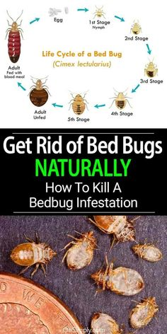 Names And Pictures Of Household Pests Very Helpful If You