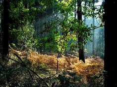 32 Fascinating Forest Photography