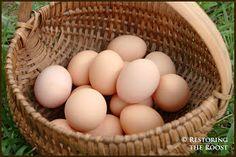 Restoring the Roost: Farm Fresh Egg Recipes