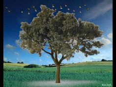 Mt kato Save Tree Save Earth, Kato, World, Youtube, The World, Youtubers, Youtube Movies