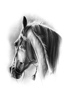 Equine Fine Art: Pencil, Charcoal & Pastel Horse Drawings (Dunway Enterprises)
