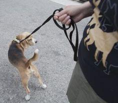 Lemmikki mukaan matkalle? Mitä pitää ottaa huomioon?