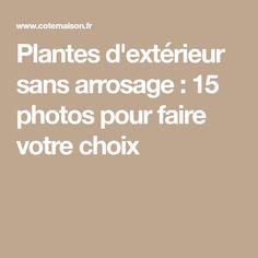 Plantes d'extérieur sans arrosage : 15 photos pour faire votre choix