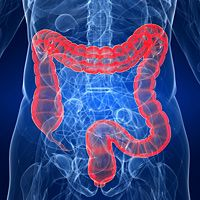 Could Your Gastrointestinal Tract Be the Key to Cancer Survival?