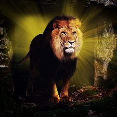the_lion_of_judah_by_robhas1left-d5vikqz.jpg (900×900)