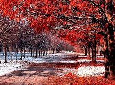 First Snowfall, Maple Orchard, British Columbia, Canada photo via templehurst What A Wonderful World, Beautiful World, Beautiful Places, Beautiful Pictures, Simply Beautiful, Trees Beautiful, Naturally Beautiful, Amazing Photos, Beautiful Landscapes