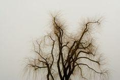 mistyfied - Oliver Nieder