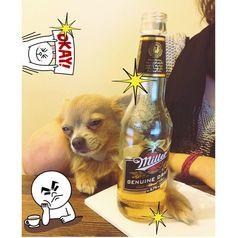 Vinny having a Miller time #vinnythedopedog