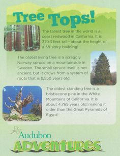 Did you know the oldest standing tree is older than the Great Pyramids of Egypt?