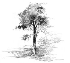 Pin by samer wannan on sketchy in 2019 pencil drawings, art. Landscape Drawing Tutorial, Landscape Sketch, Plant Sketches, Tree Sketches, Pencil Drawings Of Nature, Perspective Drawing Lessons, Pencil Shading, Pencil Art, How To Shade