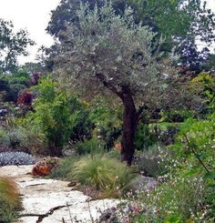 pastoralia עיצוב גינה עם צמחית בר Natural Landscaping, Garden Design Plans, Outdoor Projects, Paths, Outdoor Living, New Homes, Country Roads, Cottage, Backyard