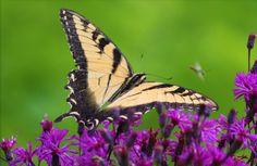 Butterfly by Sandra Walters