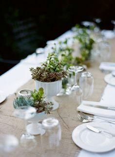 succulents in milk glass. living centerpieces.  &&& the burlap runner! :)
