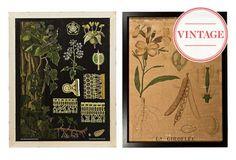 Vintage Prints:Posters that Enlighten/ One Kings Lane