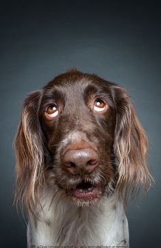 #CurrentMood– Photographer captures #dogs looking very skeptical of the camera