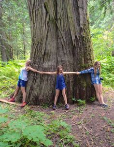 Ancient Cedars of BC's Inland Temperate Rainforest:The clearest way into the…
