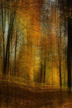 Neu in meiner Galerie bei OhMyPrints: Herbstwald - Abstrakt
