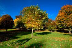 ***¿Cómo Elegir los Árboles para el Jardín?*** Si estás en la etapa de diseño de tu patio y necesitas elegir los árboles para el jardín, aquí te damos algunos consejos para aprovecharlos y escoger los mejores....SIGUE LEYENDO EN..... http://comohacerpara.com/elegir-los-arboles-para-el-jardin_10857h.html