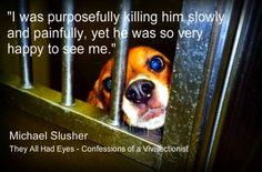 Vivisection. **** Dear God how can we continue to allow this ? There CAN'T be a person out there that thinks this isn't WRONG & HEART BREAKING ****DP Stop Animal Cruelty, Animal Testing, My Heart Hurts, It Hurts, Why Vegan, Sad Stories, Beagle Dog, Dog Signs, Golden Rule