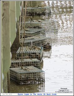 The Oyster Restoration Project at the Annapolis Maritime Museum in association with the Maryland Grows Oysters Project - Oyster Cages tied to the docks on Back Creek. Photograph posted on January 9th 2013. To see a full size version of this photograph as well as the accompanying Annapolis Experience Blog article please click through on the Pinterest images for it. Picture Copyright © 2013 G J Gibson Photography LLC & article Copyright © 2013 Annapolis Experience
