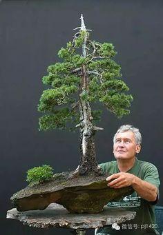 享誉世界的德国盆景大师 · Walter Pall