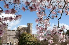 With its sea mists and acid soil, Caerhays has the perfect conditions for magnolias and boasts a National Collection of 600 species