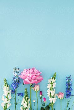 Country garden flowers arranged on blue by Ruth Black