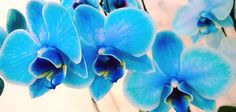 Dia 5 - Azul_A energia do dia é favorável às viagens, à propaganda e a promoção em qualquer área. Ouse, crie, recrie,  a variedade dá o tom do dia.  Azul é a cor que tende a guiar para novos horizontes, para a expansão em todos os níveis. O azul é a cor da verdade, da calma.