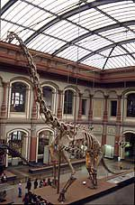 Pleurocoelus - A wastebasket taxon for American Sauropods
