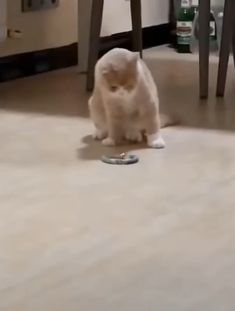 Amazing cat next I want to take yoga lessons mom, I'm ready Funny Cute Cats, Cute Cats And Kittens, Cute Funny Animals, Cute Baby Animals, Kittens Cutest, Animals And Pets, I Love Cats, Crazy Cats, Chien Golden Retriever