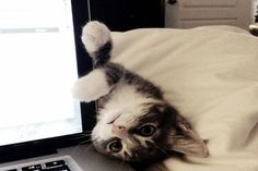 30 Naughty Cats That Are Not Disturbed With Your Private Life - Süße tiere - Katzen Animals And Pets, Baby Animals, Funny Animals, Cute Animals, Animals Images, Animal Pictures, Funny Horses, Wild Animals, Cute Kittens
