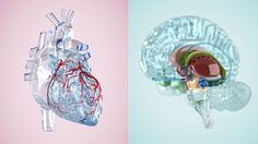When you have atrial fibrillation, stroke prevention is key. Warfarin, new blood thinners, and heart implant devices may help lower your risk.