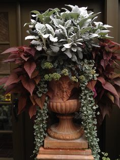 Fresh Ideas for Fall Containers Fall Formal While fall is so much about the rustic look of harvest, there's room for an elegant take on these season, too. Adding a fall blooming sedum to this planting of dusty miller, Silver Falls dichondra, and potato vi Silver Falls Dichondra, Plantas Indoor, Fall Containers, Fall Container Gardening, Succulent Containers, Garden Urns, Garden Planters, Geraniums Garden, Porch Planter
