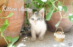 The Beauty Neuron: Kitten Diary