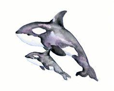 watercolor orca whale - Google Search