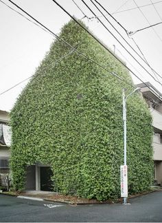 Photograph of a fantastic residential house in Tokyo, Japan completely covered in a natural green facade / captured by Guen-K