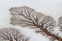 Rivers form tree-like shapes in the desert in Baja California, Mexico. The photograph was submitted to National Geographic by Adriana Franco.