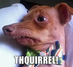 Thquirrel!!!!