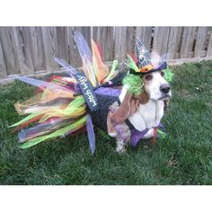 Redbarn is your source for premium dog & cat products. We make natural bully sticks, dog treats & chews as well as cat food & treats. Pet Halloween Costumes, Pet Costumes, Raining Cats And Dogs, Pet Treats, Basset Hound, Happy Dogs, Mans Best Friend, Playing Dress Up, Animal Pictures