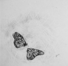 #butterfly #butterflies #draw #draws #drawing #drawings #drawingpainting #art #arts #paint #painting #paintings #paper #pencil #fly #summer #flight #polish #poland