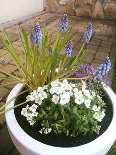 #niezapominajka #wiosna #bashotel #kraków #odpoczynek #rośliny #hotel Plants, Garden