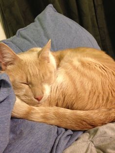 Owl (now named Adamai) has been doing great! He's a very, very sweet boy who loves to cuddle all the time. The first night he was already sitting on the couch with us and sleeping in the bed. Luckily his only day home alone so far was yesterday, and he was a perfect boy- sleeping on the bed when I got home at 4. We were very surprised when we had a friend over last night and he didn't hide! He warmed up right away looking for cuddles. We absolutely love him! :)