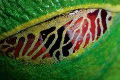 Картинки по запросу органы обоняния у змей