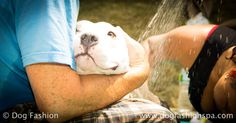 Do the right thing. Wash your dog often. Dog Wash, Dog Care Tips, Diy Dog, Dogs Of The World, Diy Stuffed Animals, Dog Stuff, Doggies, Cute Pictures, Your Dog