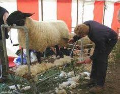 Sheep Shearing Festival at Stone Barns Center   KINDSnacks ...