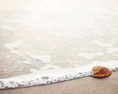 A beautiful free photo of seashell beach and sand shore. This image is free for both personal and commercial use. No attribution required.