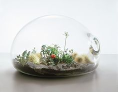Gorgeous Terrariums