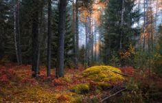 35PHOTO - Сергей Шабуневич - Тихо в осеннем лесу*)