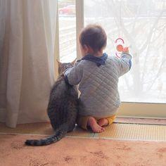 「本日、らいちゃんのお家に一時帰宅予定です!  お互い忘れてないと良いなぁ。  #生後11ヶ月 #4月生まれ #赤ちゃんと猫 #猫と子ども#にゃんだふるらいふ #ねこ部 #猫#ふわもこ部 #しましま軍団 #キジトラ部 #在りし日の二人 #ig_baby #ig_kids #instapets…」