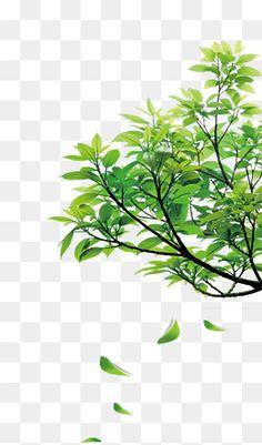 Studio Background Images, Background Images For Editing, Photo Background Images, Photo Backgrounds, Tree Photoshop, Photoshop Design, Imagen Natural, Episode Backgrounds, Handmade Home Decor